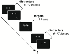 In our basic task, one or two streams of stimuli are rapidly presented. The target(s) to be reported are highlighted with cues that encircle them. On half of trials, participants are first queried about the left target, and in half they are first queried about the right target. This has no significant effect on the main result- a substantial disadvantage in reporting the right target, if the left target must also be reported.